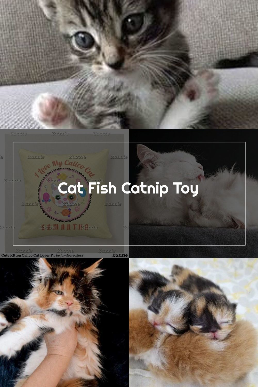 Cat Fish Catnip Toy In 2020 Catnip Toys Calico Cat Kittens Cutest