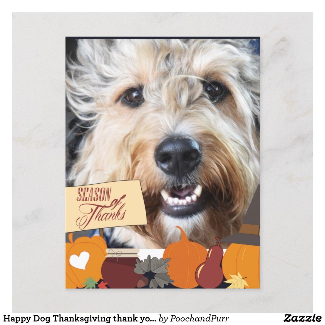 Happy Dog Thanksgiving Thank You Postcard Zazzle Com Dog