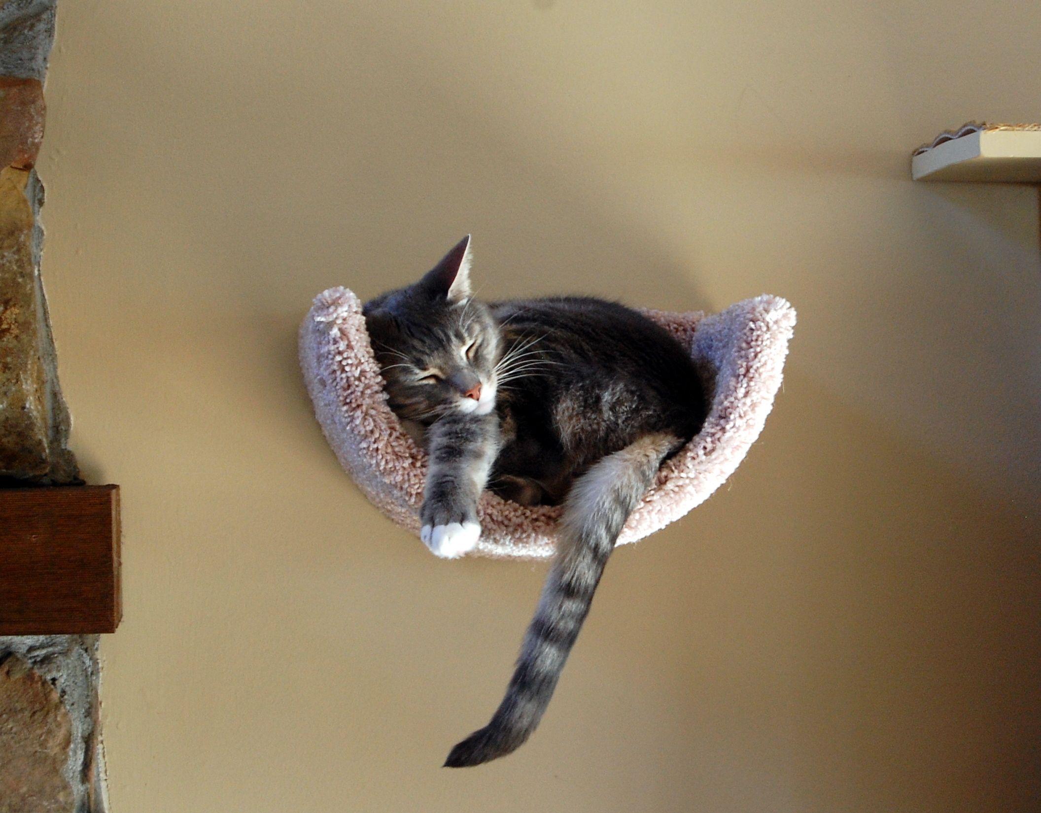 Park Art|My WordPress Blog_Wall Mounted Cat Bed Diy