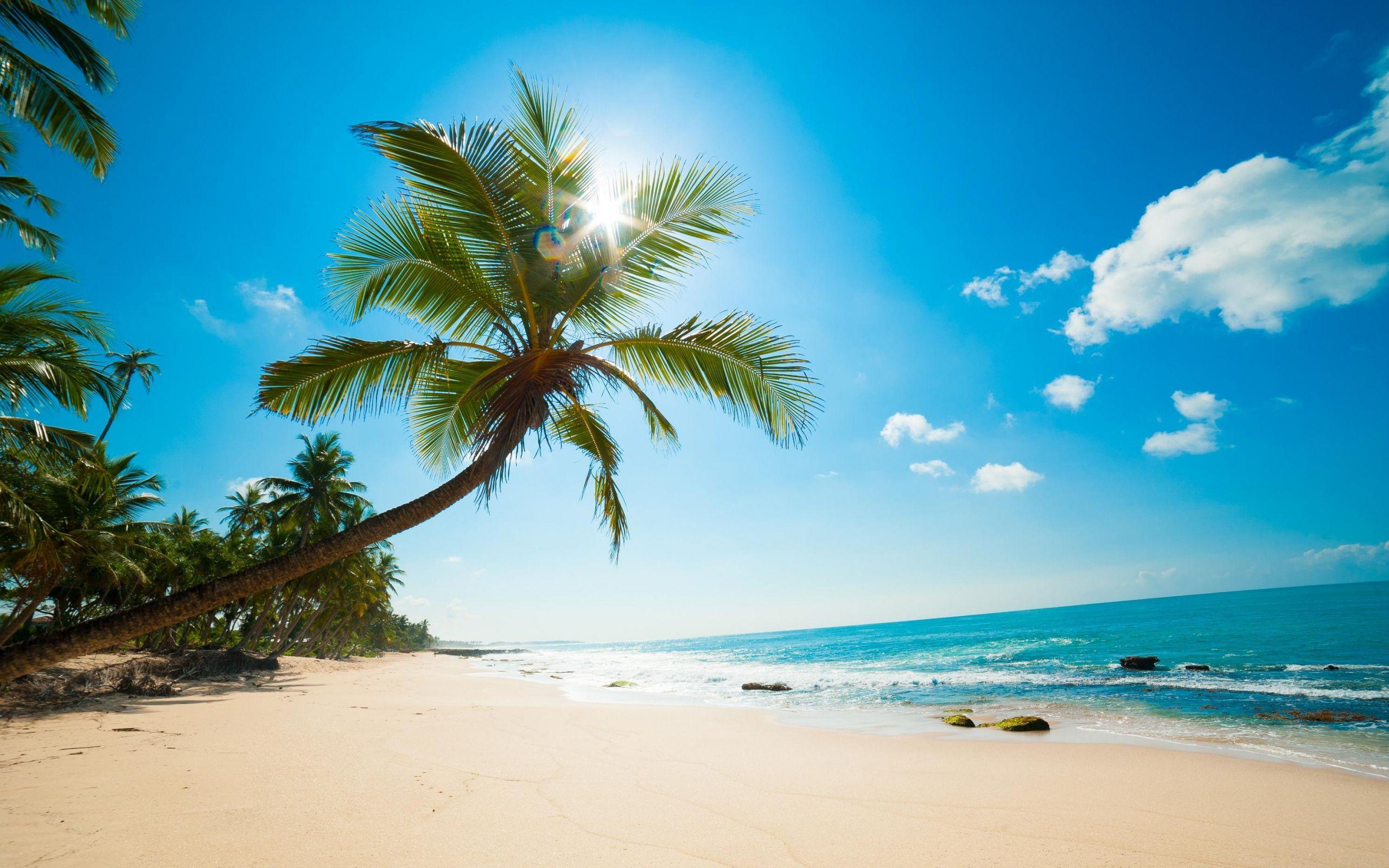 Microsoft Palm Tree Wallpaper Hd Google Search Beach Wallpaper Beach Wall Murals Caribbean Beaches
