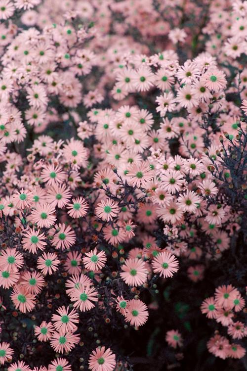 Untitled by lydia greenaway via tumblr pretty backgrounds in untitled by lydia greenaway via tumblr mightylinksfo