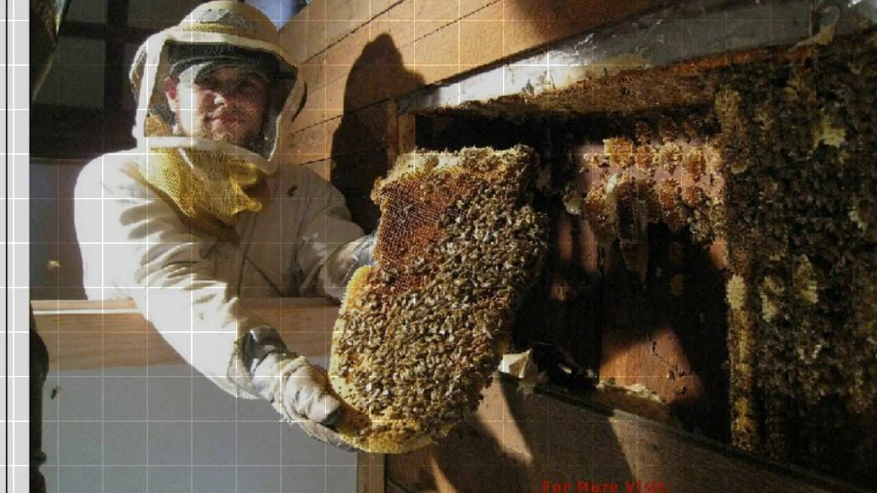 """""""Most affordable Ecofriendly HoneyBeeremoval service by"""