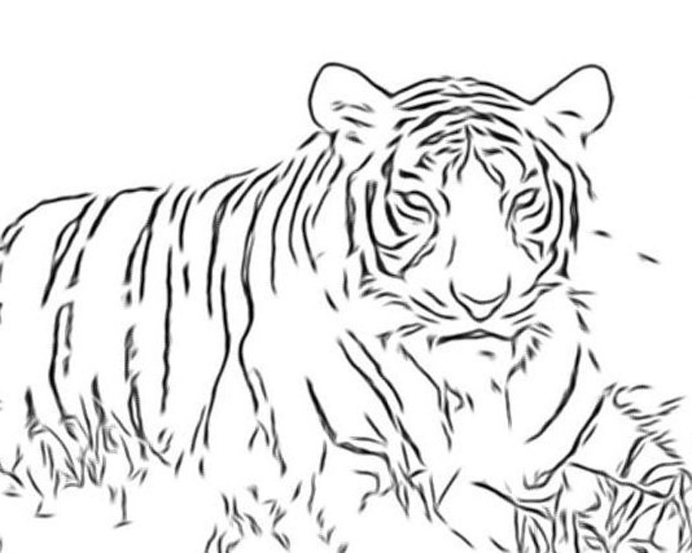 nice big cat coloring pages special picture colouring