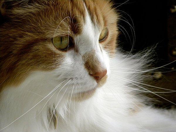 Serious Gato 1 www.juliepalencia.com