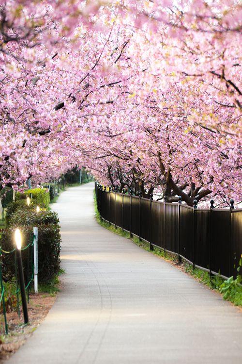 c1tylight5:  Sakura Front Line | Masato Mukoyama