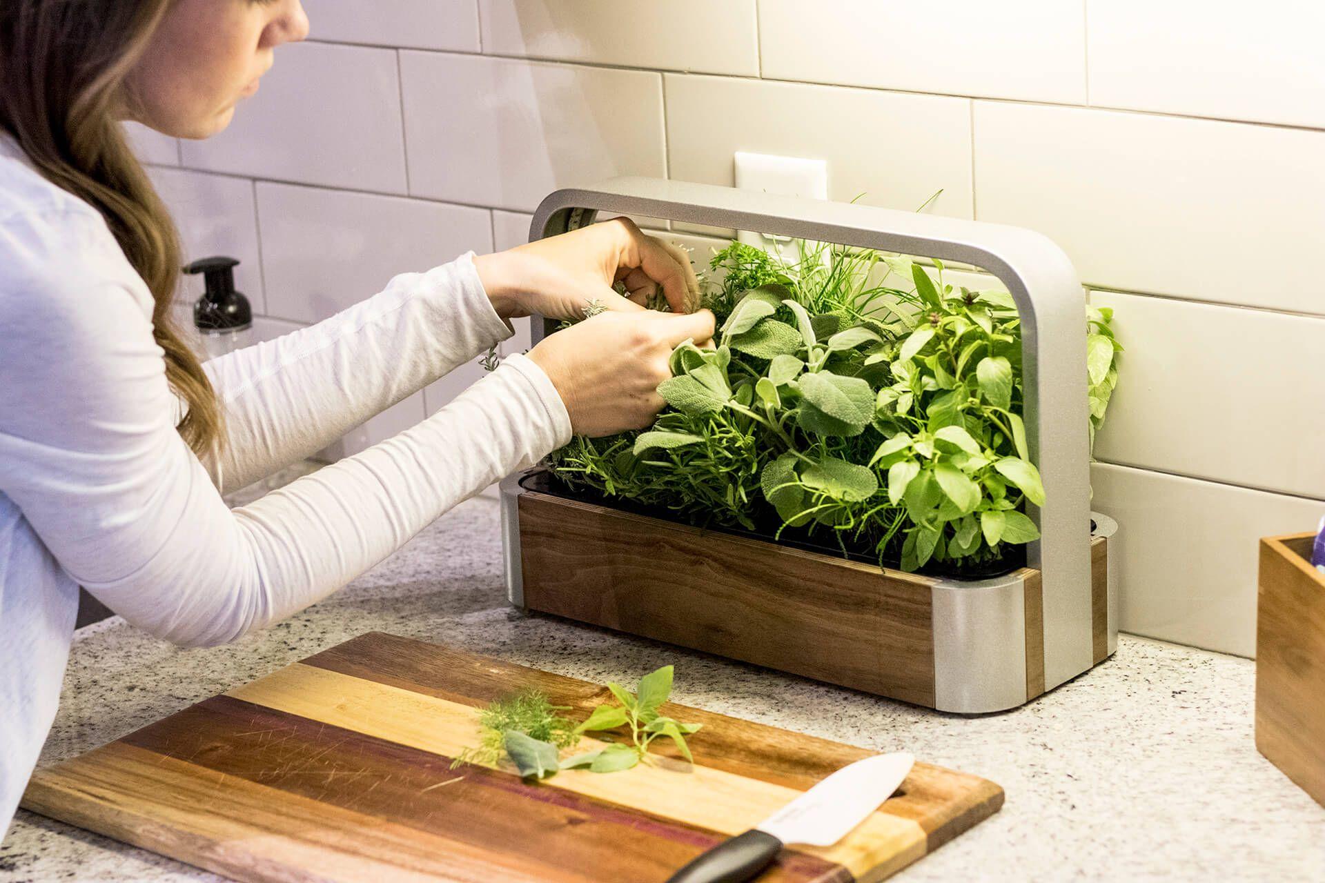 Edn Smallgarden Our Countertop Intelligent Indoor Garden