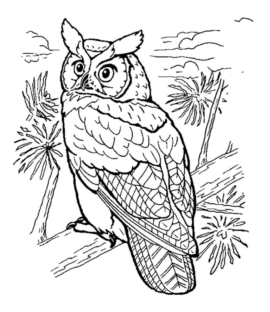 Раскраска сова | Раскраски с животными, Нарисовать сову ...