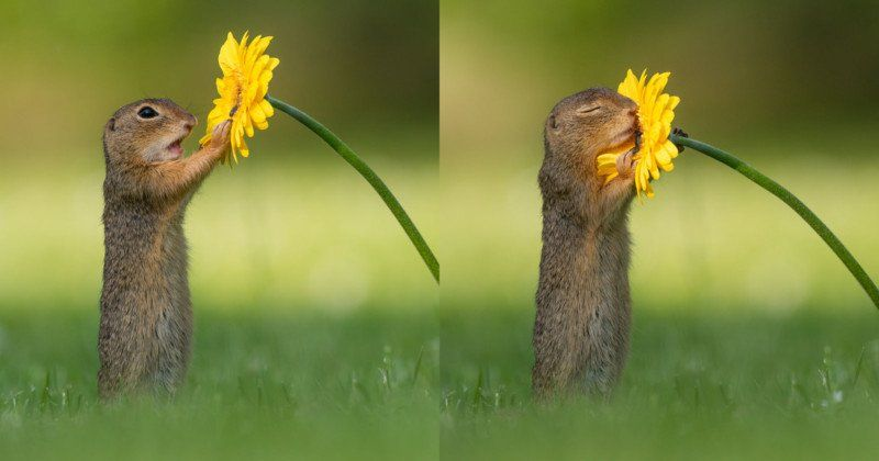 Photographer Catches Squirrel Stopping To Smell A Flower Squirrel Smelling Flowers Animal Photography