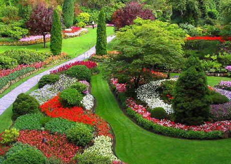 Cuidados del jardin gu a de jardiner a part 8 for Cuidados del jardin
