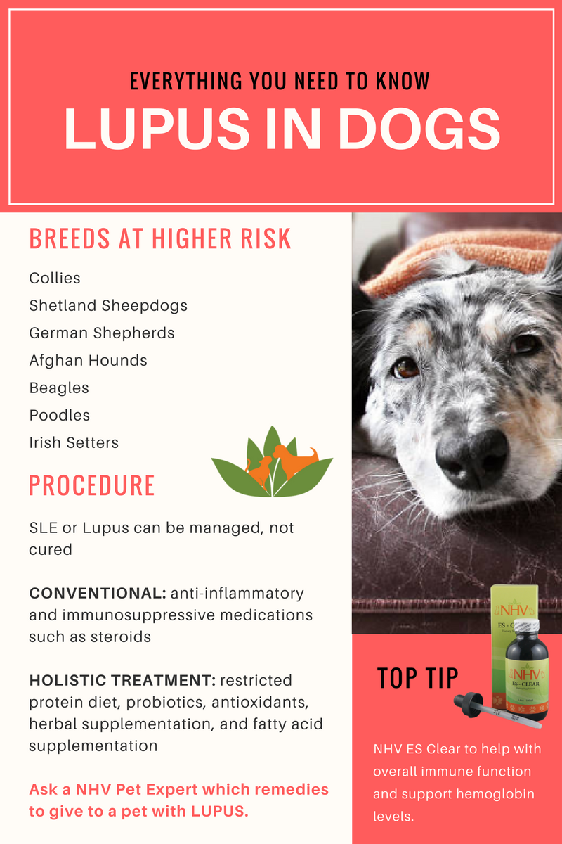 Vet Talk Lupus In Dogs Everything You Need To Know Lupus In Dogs Dog Treatment Dog Illnesses