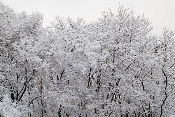 Nothing is more beautiful than snow covered branches