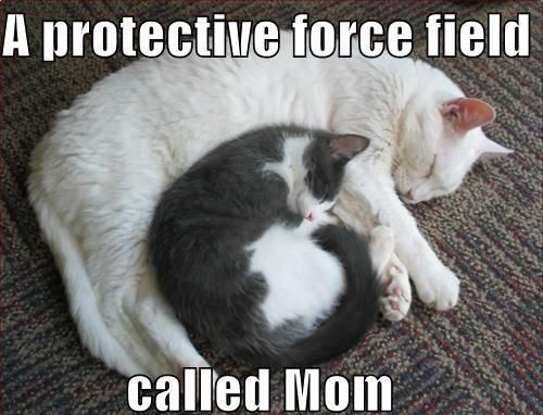 cute captions 14 Daily Awww: Animals + captions = Awws and lols (28 photos)