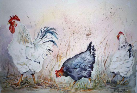 Tableau Peinture Poule Coq Basse Cour Volailles Animaux Aquarelle