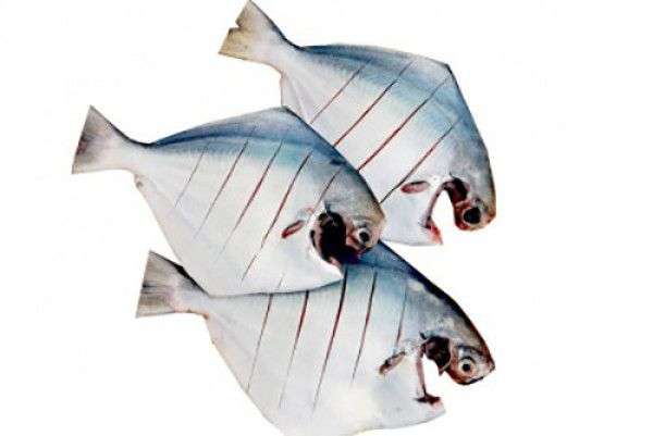 Fresh Fish Basket Offers White Pomfret Fish Home Delivery Online In Delhi Ncr Recipe To Prepare It Is Many Choose The One You Wo Pomfret Fish Fish Fresh Fish
