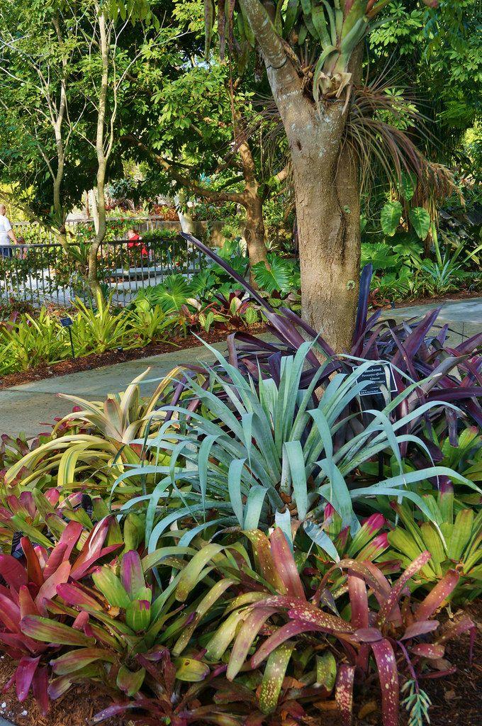 Alcantarea odorata and assorted broms. Naples Botanical Garden, Florida.