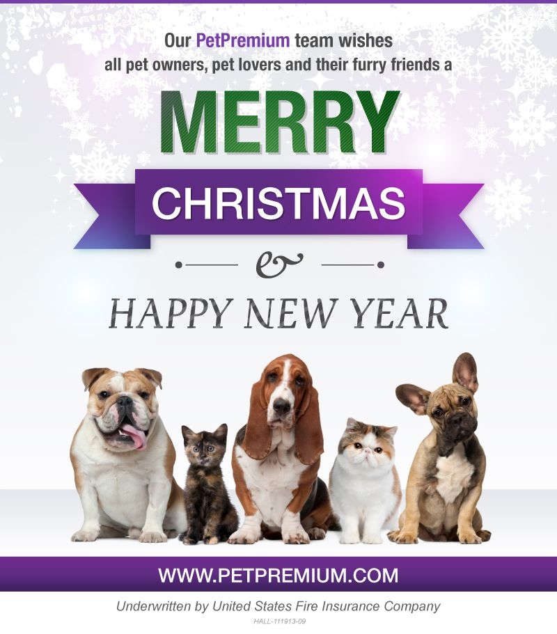 Merry Christmas! All about cats dogs pets go here