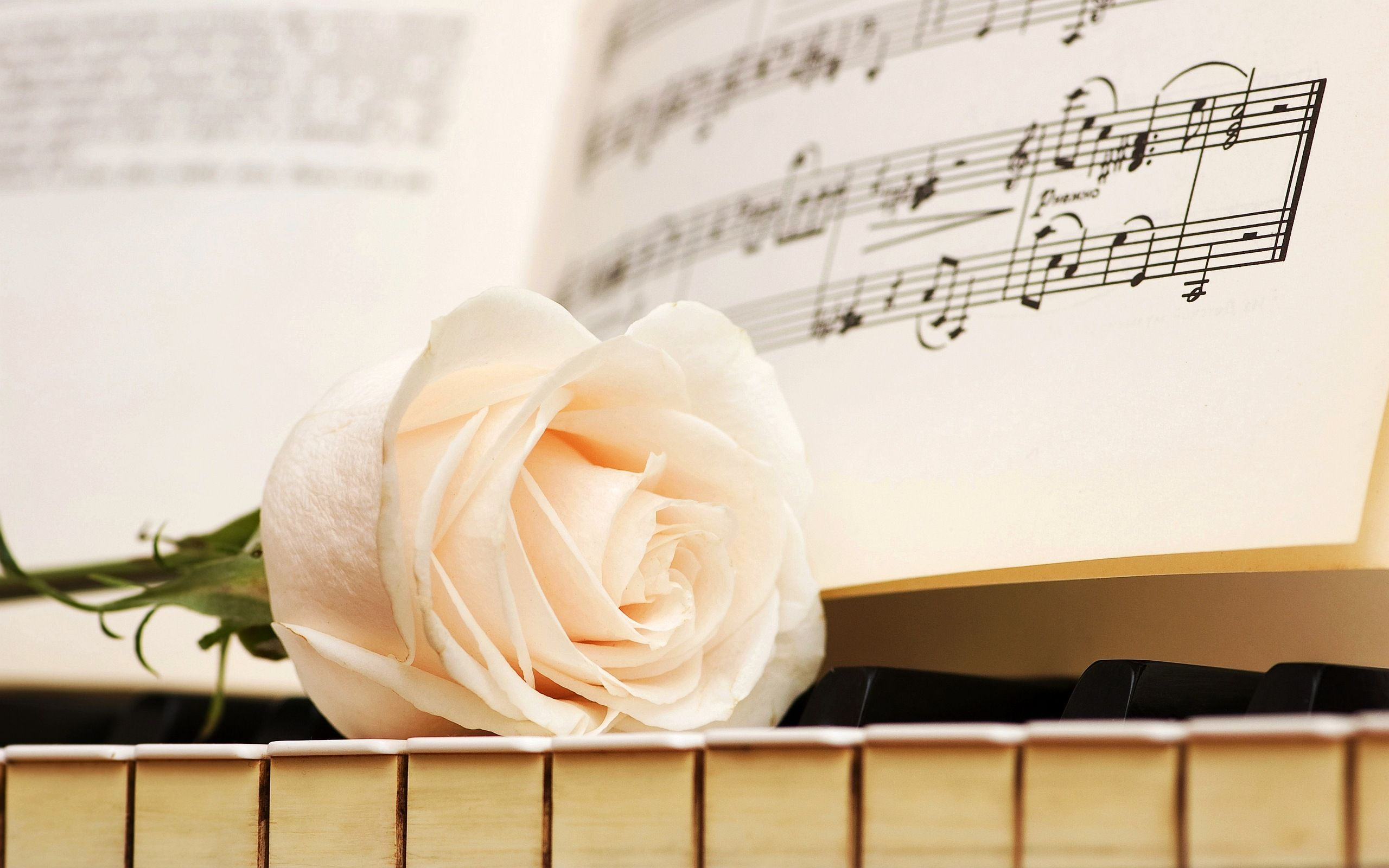 Piano Music Pink Rose Personalized Poster Wall Art Home Decor Gift Made In USA
