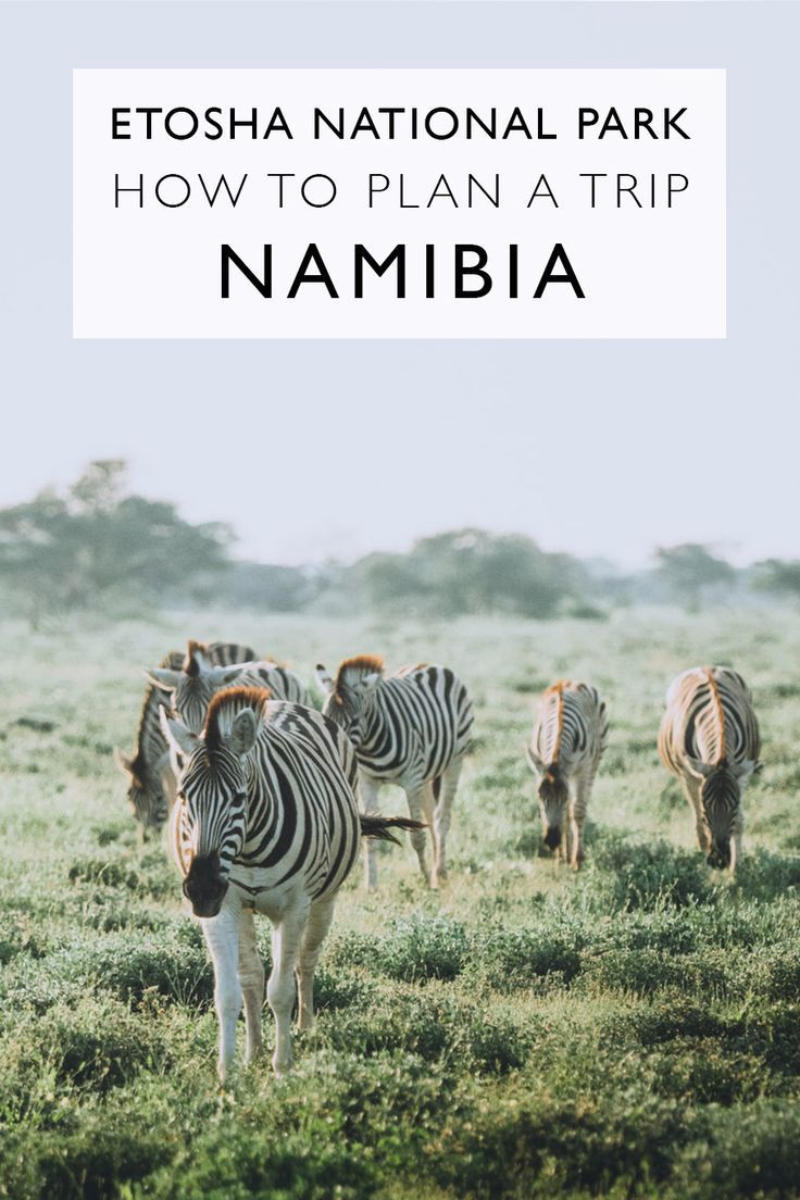 How To Plan A Trip To Etosha National Park | Namibia | Africa