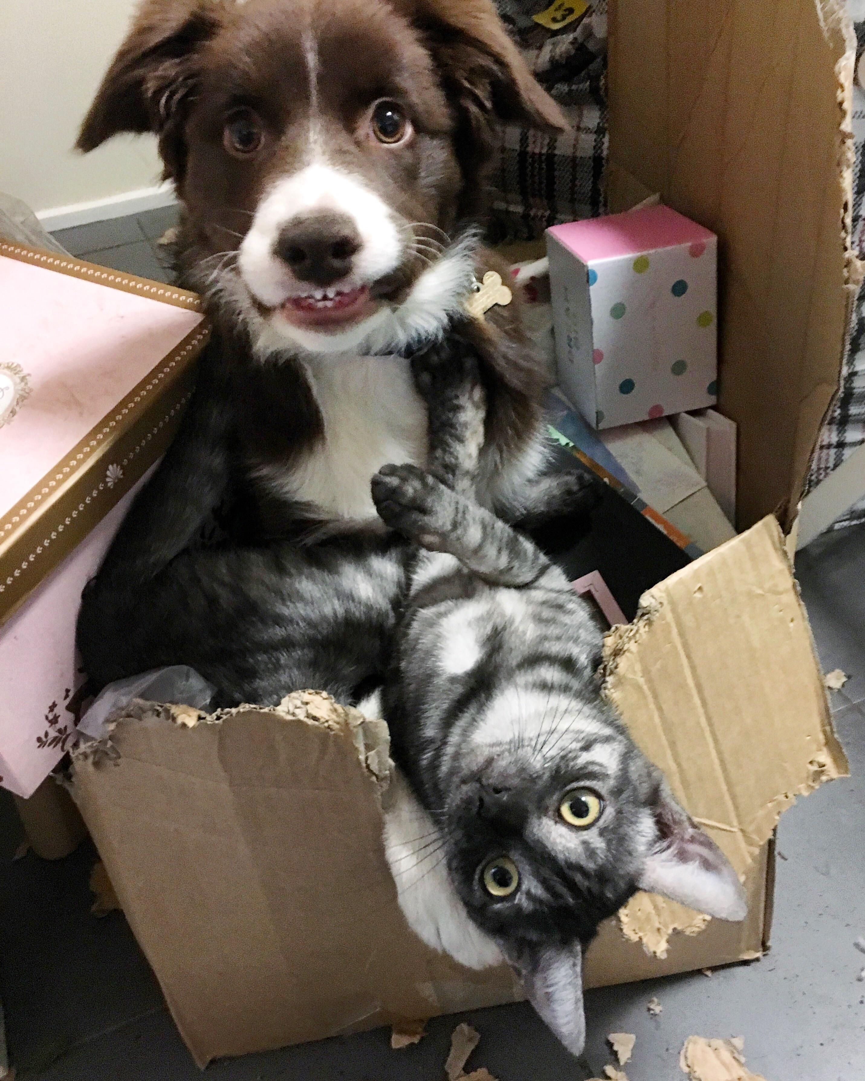 We Got A Puppy And Kitten At The Same Time So That They D Grow Up Together And They Are Hilarious Little Trouble Makers Getting A Puppy Funny Animals Animals