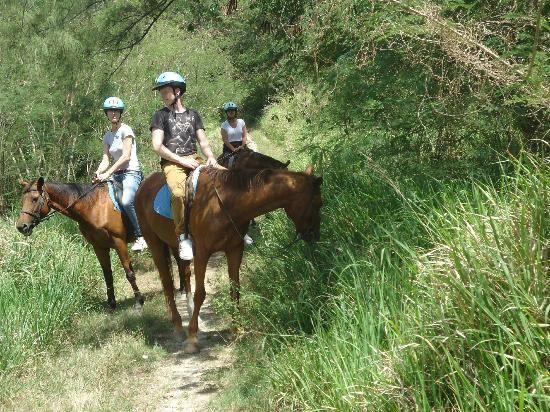 Must Do in Barbados | Caribbean International Riding Centre - Barbados - Reviews of ...