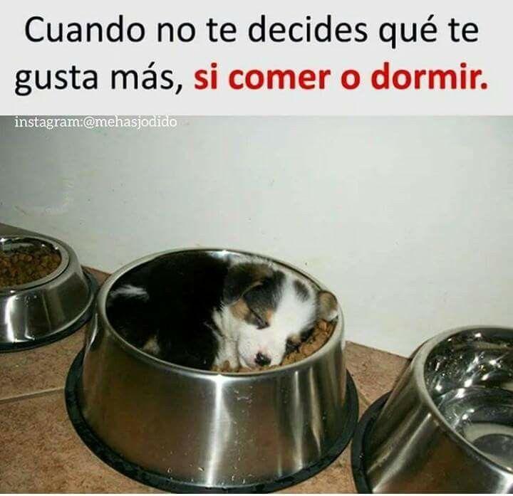 Imagenes Graciosas Para Whatsapp Memes Chistes Chistesmalos Imagenesgraciosas Humor Memes En Espanol Best Memes Funny Memes