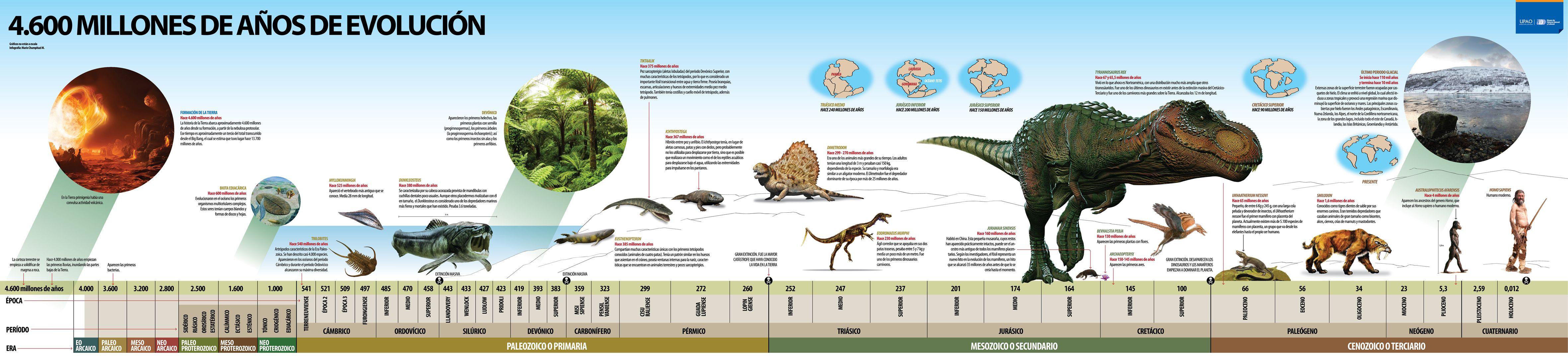 Evolución de la vida y la escala geológica. | Historia | Pinterest ...