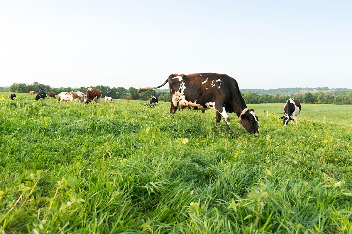 5 reasons cows appreciate pasture cow appreciation day
