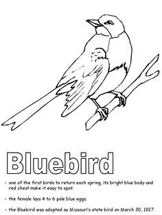 Bluebird Coloring Page United States State Emblems Printables