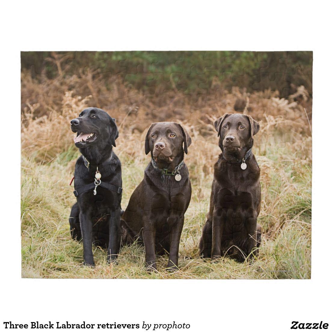 Three Black Labrador Retrievers Jigsaw Puzzle Zazzle Com Black Labrador Retriever Labrador Retriever Black Labrador