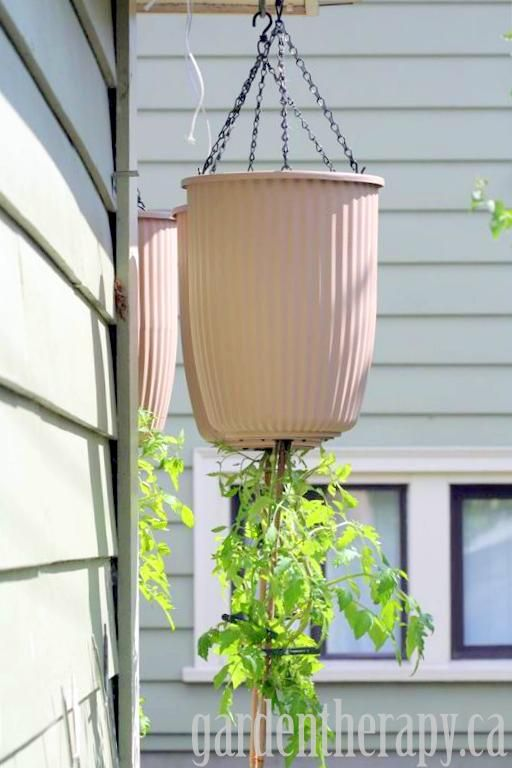 How To Plant An Upside Down Tomato Planter Upside Down