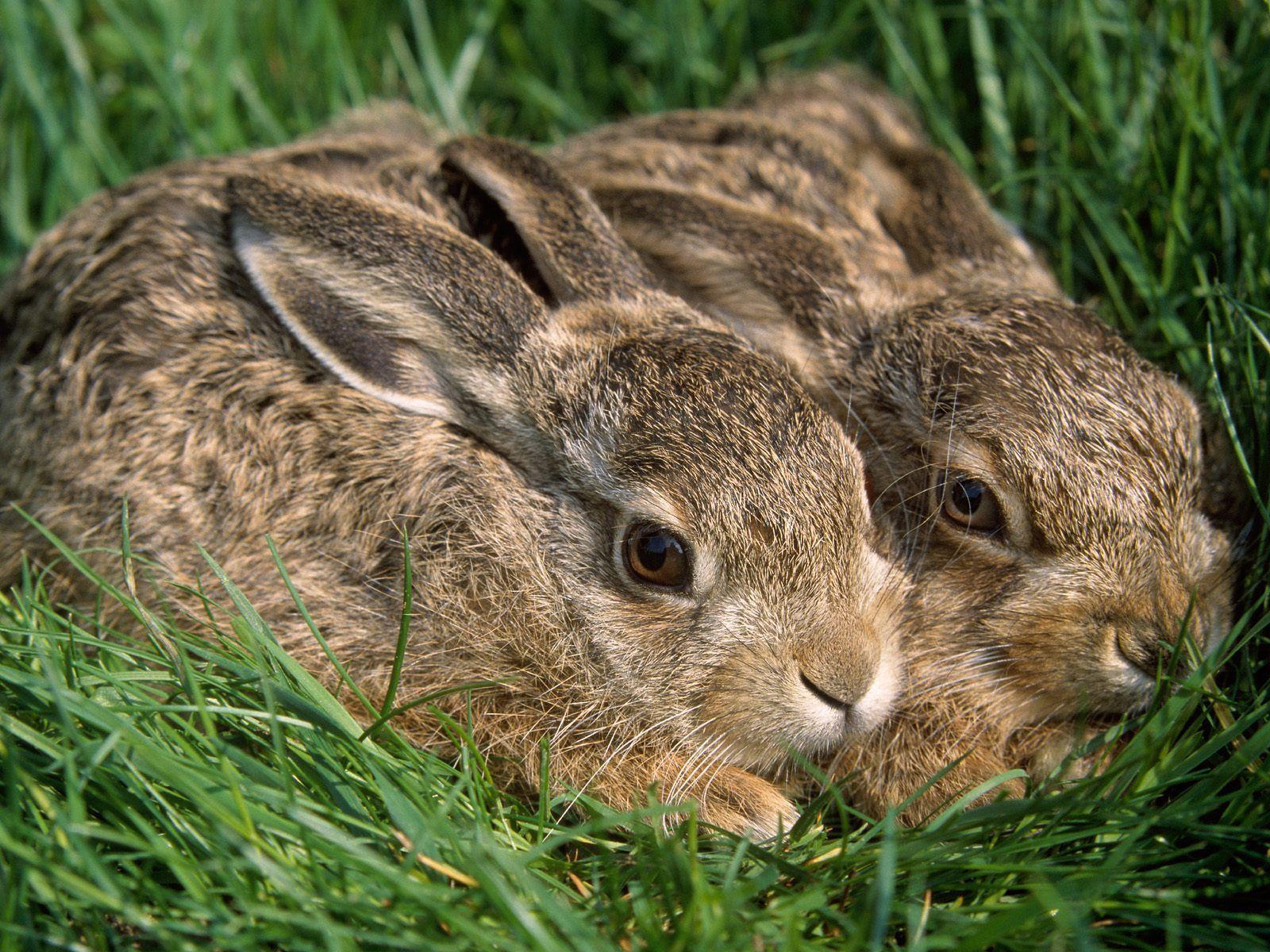 cute pair of bunnies