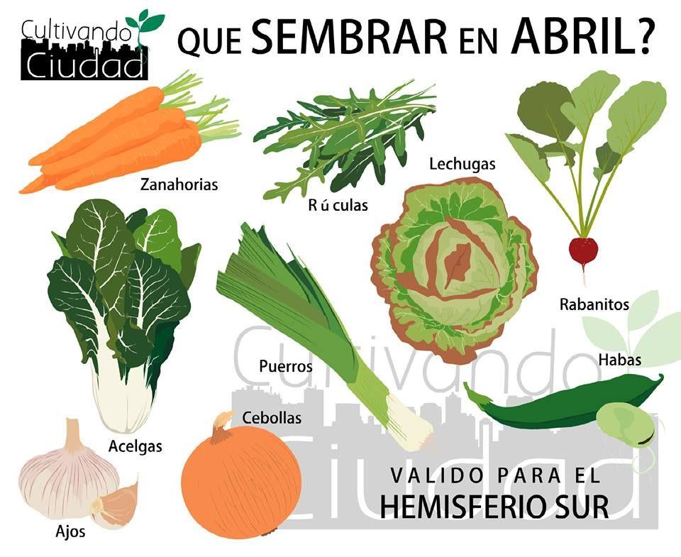 A FACEBOOK - CULTIVANDO CIUDAD | Huerta y jardin | Pinterest ...