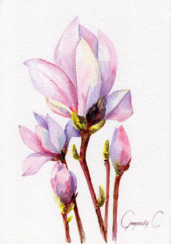Magnolia Flowers Purple Blue Pink Green Yellow Flower Illustration Watercolor Flowers Drawings