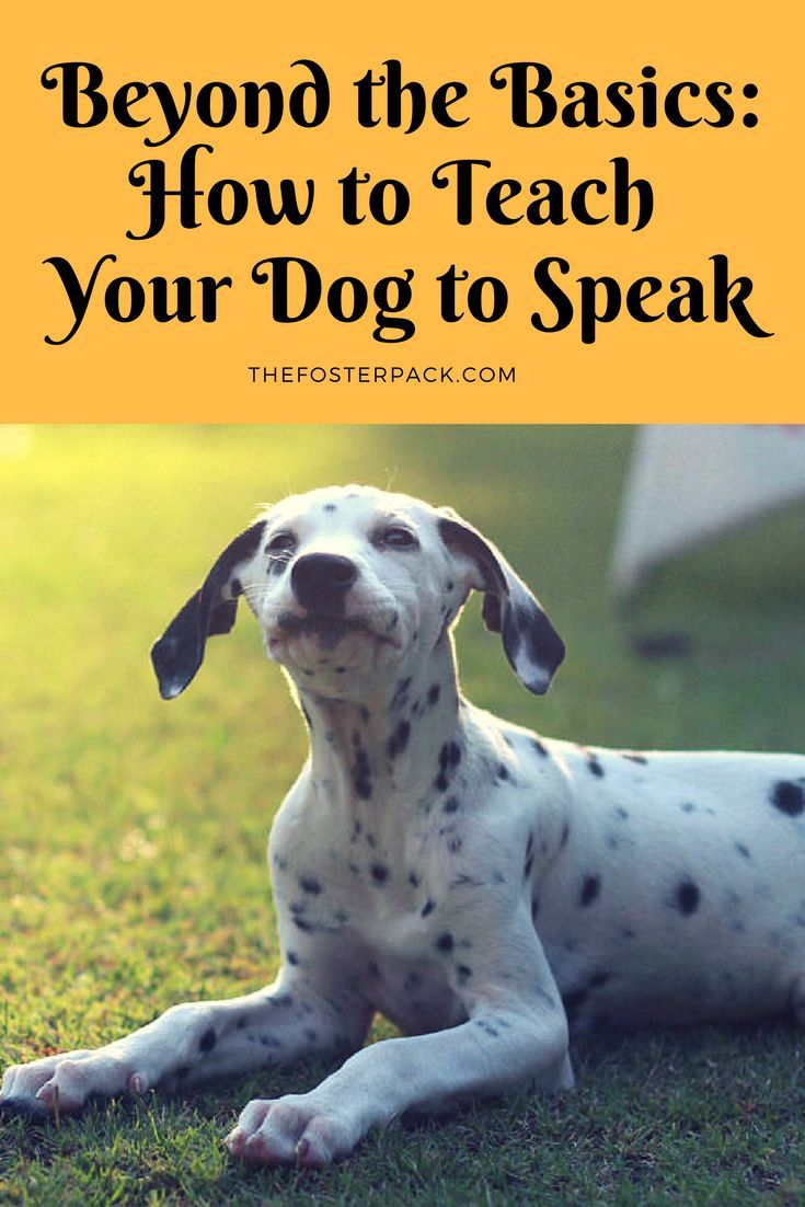 Beyond The Basics How To Teach Your Dog To Speak Dog Training