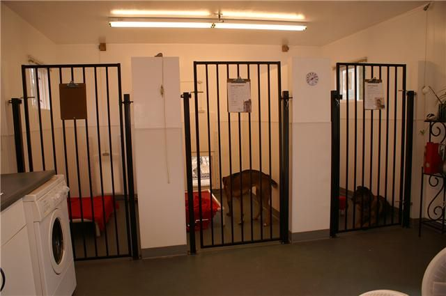 Dog Boarding Kennels Of Our Indoor Outdoor Runs