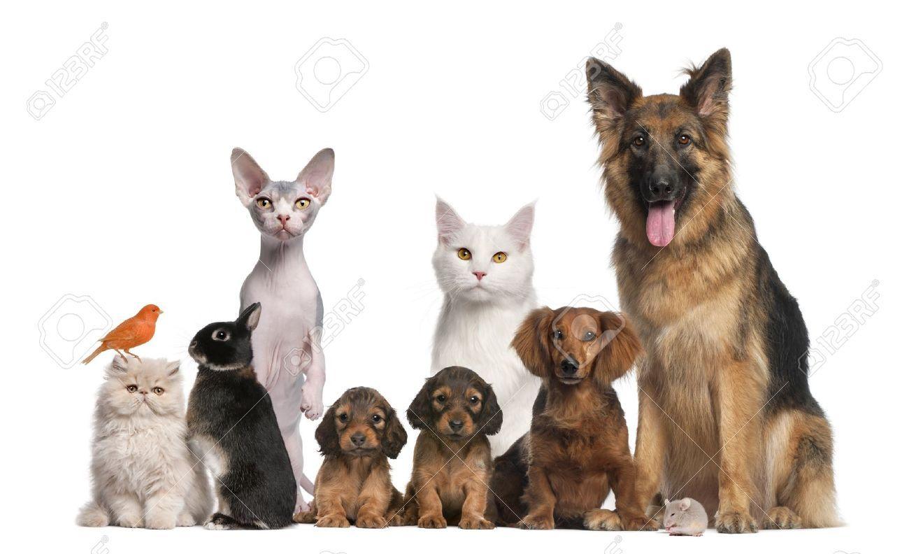 Resultado de imagem para big and small dogs