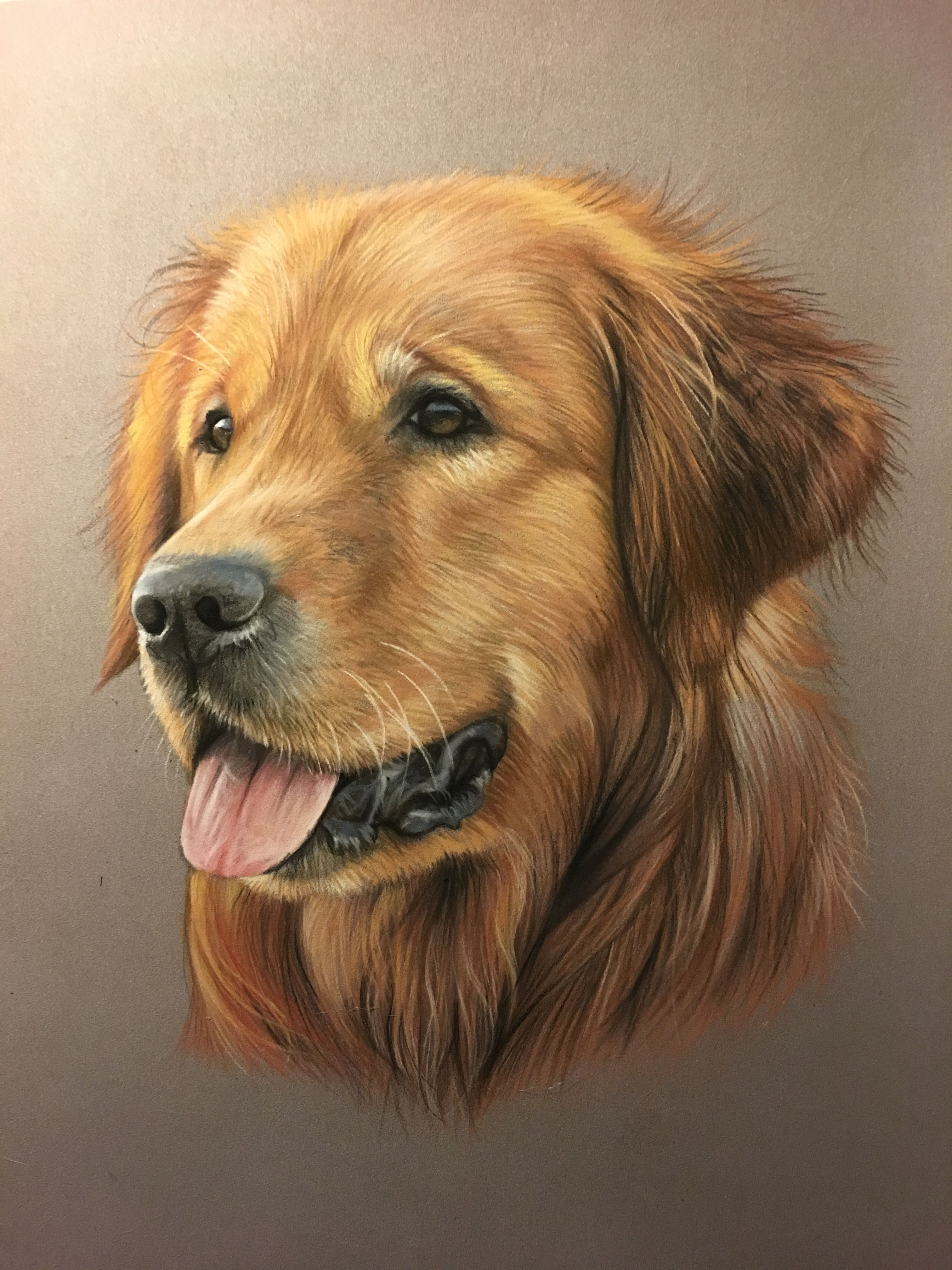 Golden Retriever Au Pastel Dessin Animalier Art Animalier Peinture Animaliere Dessin De Chien Peintures De Chien Peintures Animalieres
