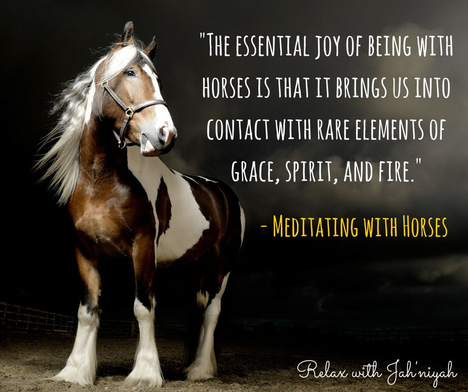 Meditating with Horses