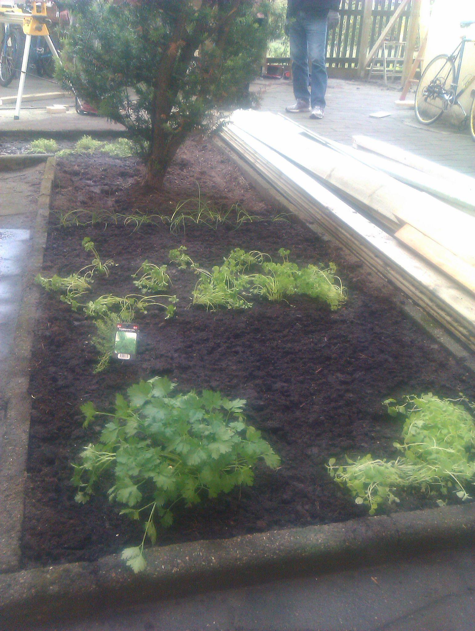 Guerrilla gardening. Persillen angriber!...