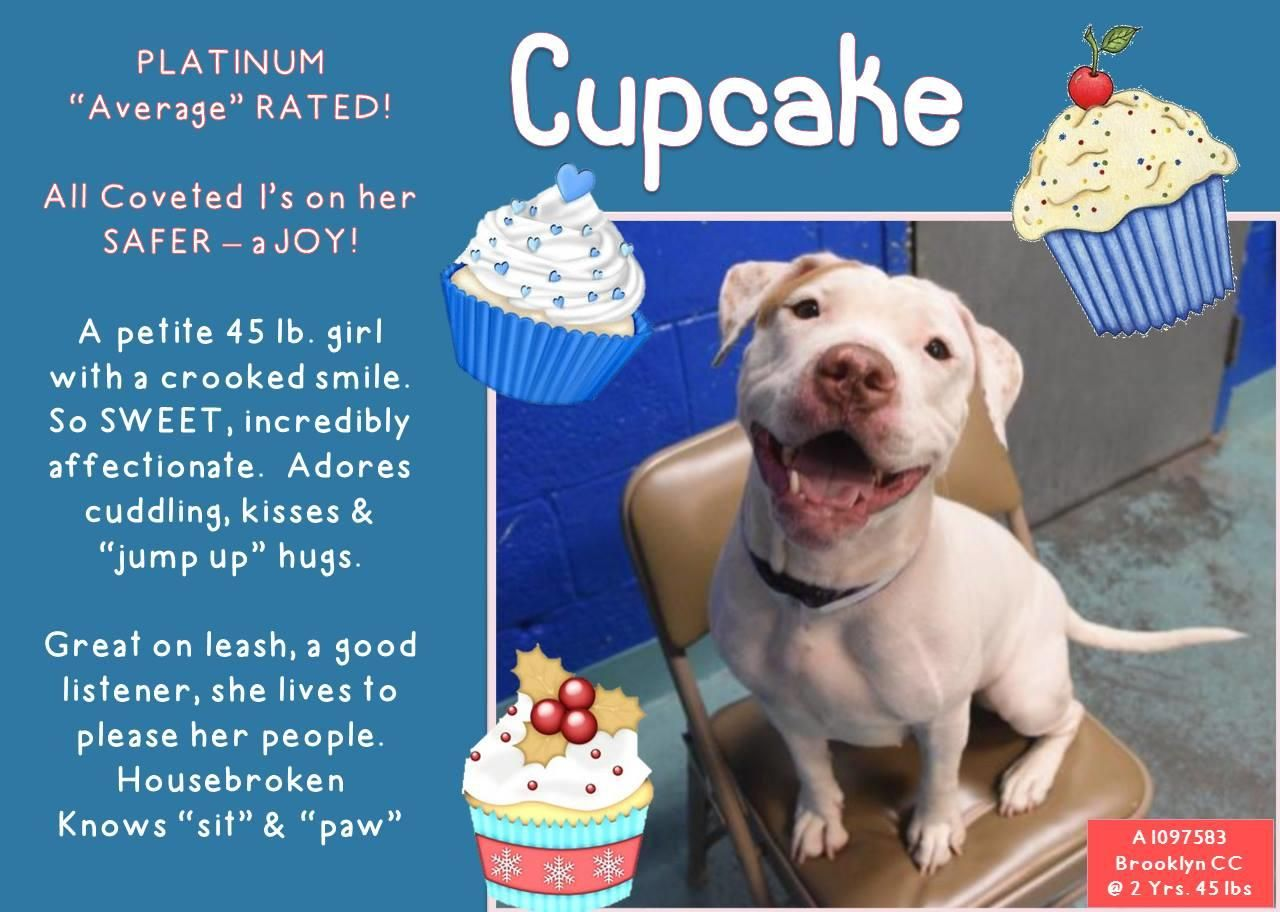 CUPCAKE – A1097583 sweet dog girl  on death list today! If you would like to foster or adopt and can't make it to the shelter, please write an email NOW to the Urgent Help Desk at Helpdogs@Urgentpodr.org Their experienced volunteers will assist you one-on-one with rescues and the application process. Transport can be arranged by rescues to the homes of approved fosters or adopters within 3-4 hours of New York City