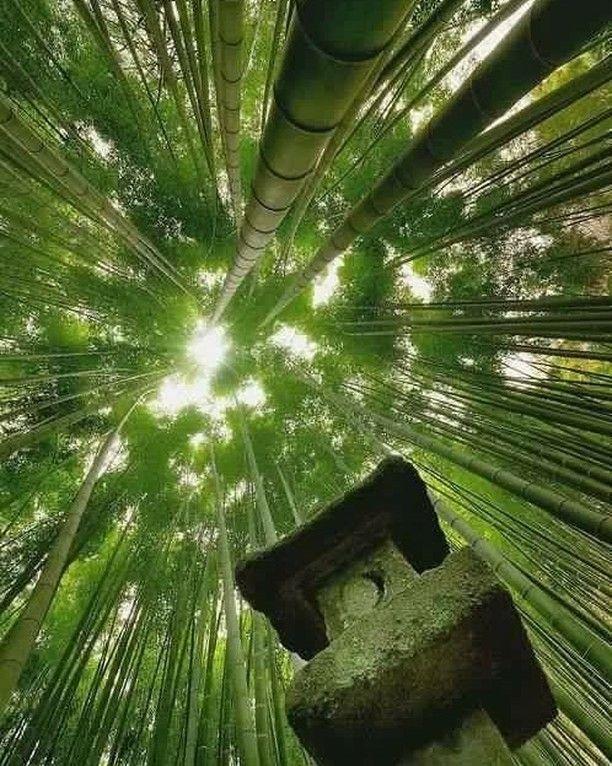 """62 Likes, 1 Comments - Turandot Iki (@turandot_iki) on Instagram: """"Crescono i fitti bambù/ ognuno per suo conto/ nell'intreeccio delle tadici è la prosperità di monti…"""""""