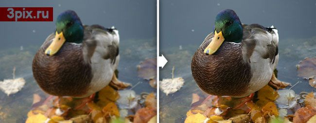как увеличить четкость фотографии в фотошопе