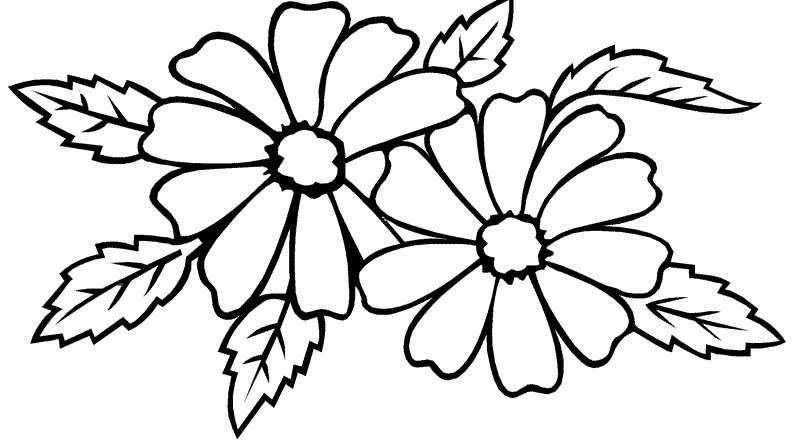 Paling Keren 23 Sketsa Gambar Bunga Tulip Hitam Putih Sketsa Bunga Gambar Sketsa Bunga Mawar Hitam Putih Gambar Bunga Di 2020 Halaman Mewarnai Buku Mewarnai Sketsa