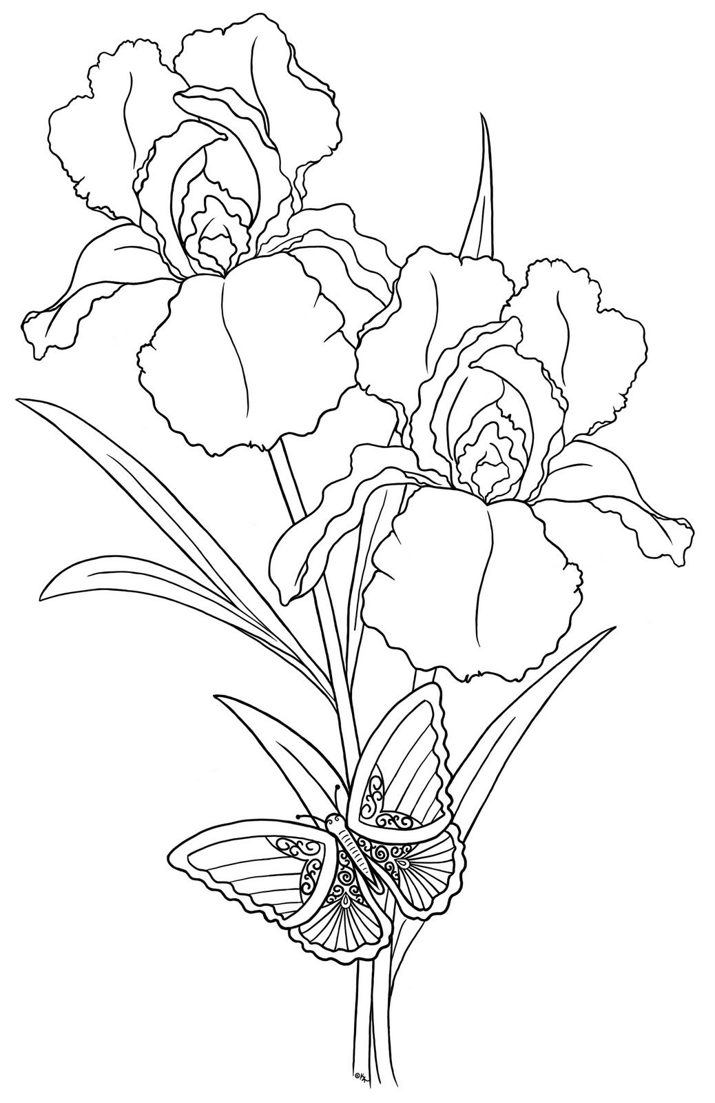 Iris 27s N 27butterfly Bearywishes Blogspot Com Jpg 1 038 1 600 Pixels Iris Drawing Flower Drawing Flower Coloring Pages