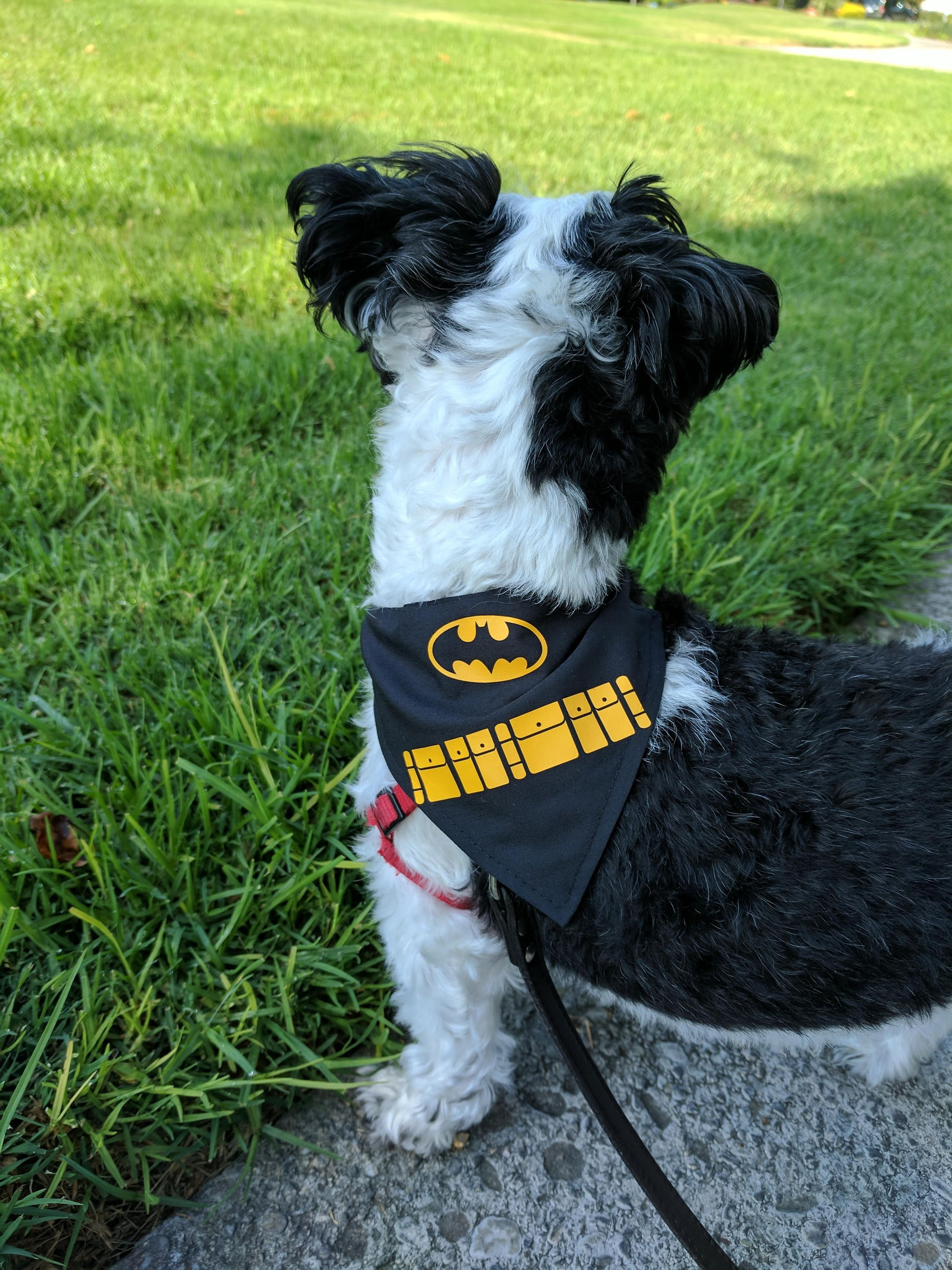 Pin by The Pawfit on Store Pet clothes, Batman inspired