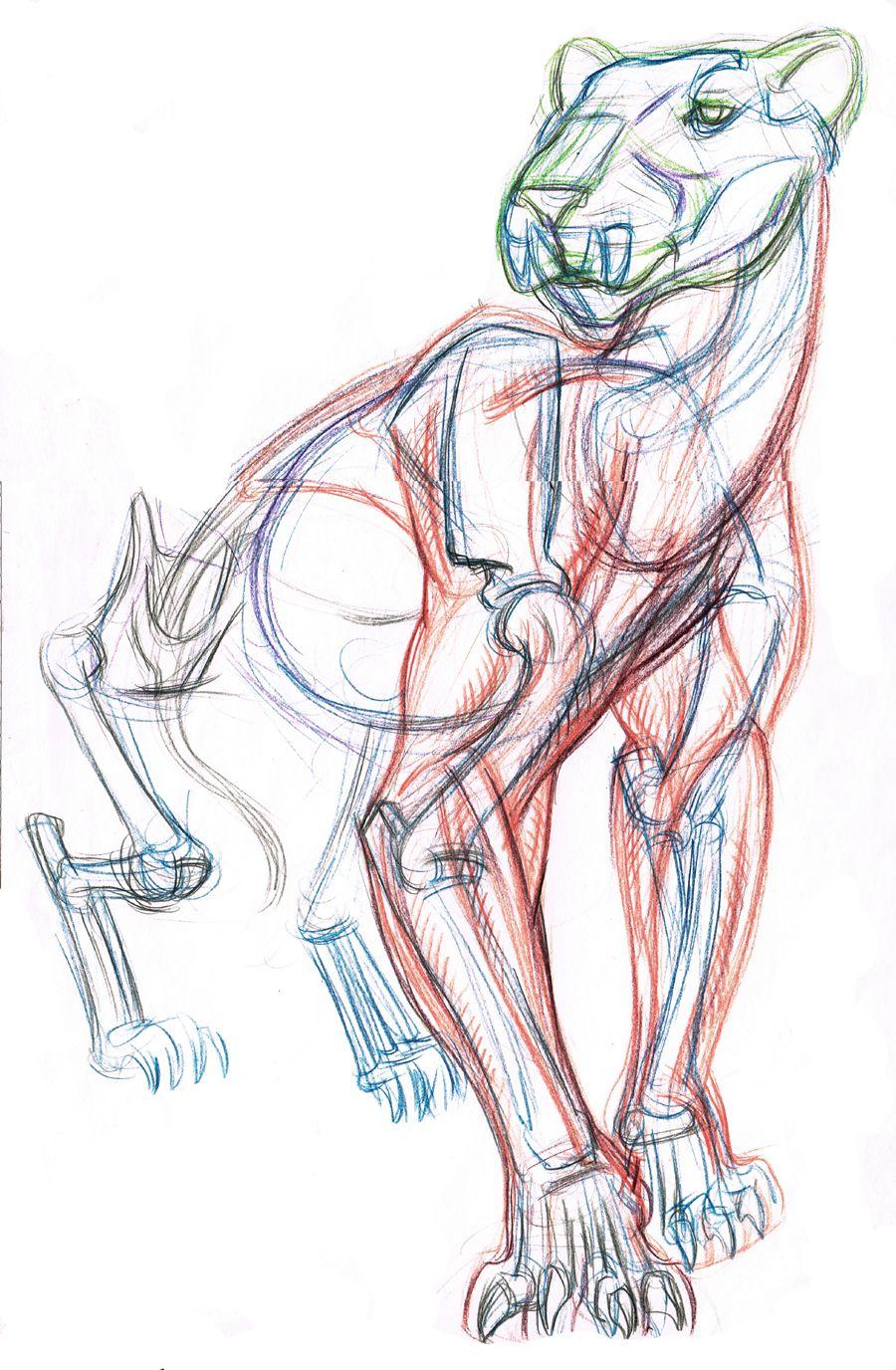 Animal drawing class demo of taking a sabretooth tiger skeleton ...