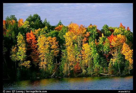 Trees In Fall Colors Bordering A Lake Wisconsin Usa Autumn Scenery Fall Colors Photo