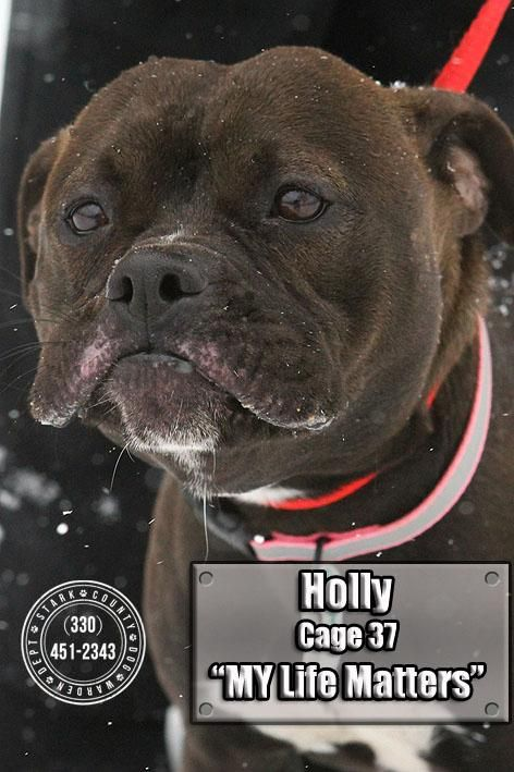 Adopt 06 Holly Adopted On Boxer Dogs Adoption Boxer