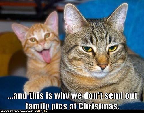 Why cats don't send cards at Christmas...