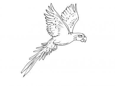 Araras Desenho Pesquisa Google Com Imagens Desenho Arara